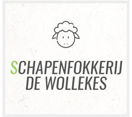 Schapenfokkerij De Wollekes - Schapenfokkerij